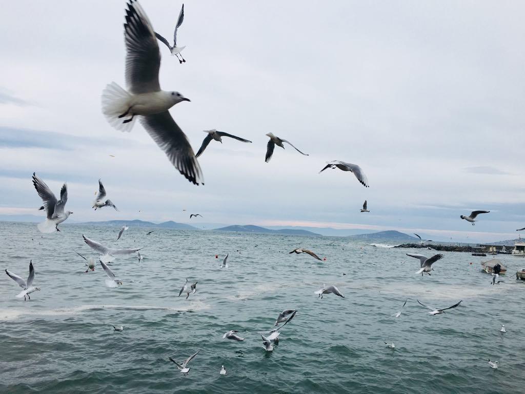 картинки море чайки вертикальные минимального